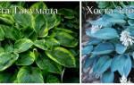 Цветы, которые можно посадить осенью: