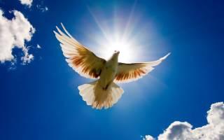 Господи, молю тебя о мире