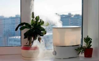 Влажность воздуха — фактор здоровья растений