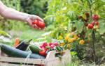 Пряные компаньоны для овощей.