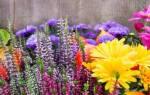 10 самых важных дел в саду в сентябре