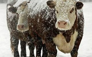 18 февраля в народном календаре — Агафья Коровница, Голодуха.