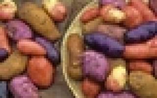 У каждого сорта картофеля свои особенности и уход, от которых естественно и зависит урожай