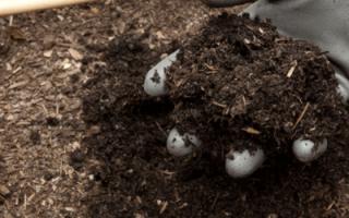 Готовим компост правильно