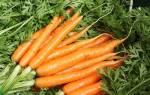 Морковные секреты в копилку садовода.