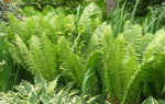 Растения для цветника в тени
