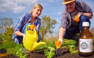 Перекись водорода, применение на огороде