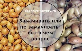 ЛУК ПЕРЕД ПОСАДКОЙ