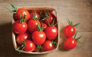 Где, как и сколько хранить собранные помидоры