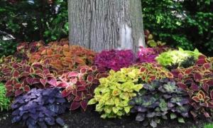 Достойное обрамление для садовых деревьев