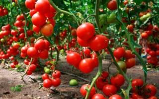 Агротехника выращивания томатов ОТ и ДО.