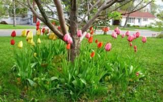 Виды растений, благоприятно растущие под кроной яблони