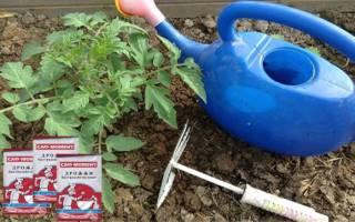 Подкормка для огурцов и помидоров: