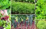 Что посеять и посадить в огороде в июле