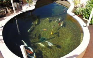 Живой водоем с биофильтром