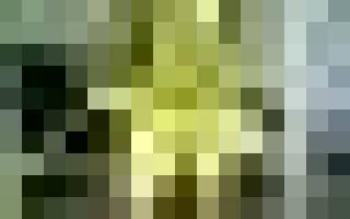 Пустоцвет на огурцах, в чем причина его появления
