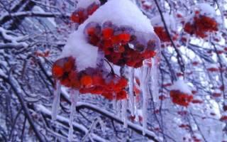 Сегодня 13 декабря — Андрей Зимний