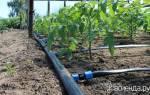 Капельный полив рассады — удобное приспособление которое отнимает мало времени, а польза очевидна в первую же неделю