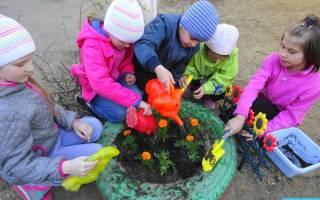 Цветы в награду за терпение Сажаем сад