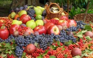 10 лучших Мичуринских сортов плодово-ягодных культур: