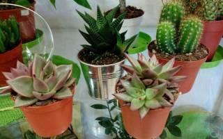 5 комнатных растений, которые невозможно «залить»