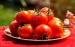 Подкормки томатов во время бутонизации, цветения и завязывания плодов