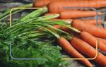 Польза и возможный вред отварной моркови. Как употреблять для лечения и в косметологии