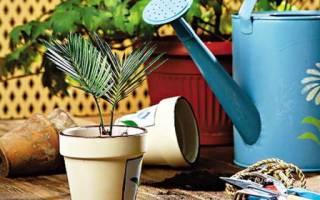 Ухаживаем за комнатными растениями правильно