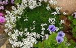 Почвопокровные растения для альпийской горки.