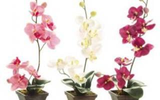 Вот такой подарок мне преподнесла орхидея на 8 марта!