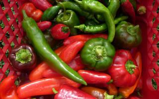 Сбор и хранение урожая перцев