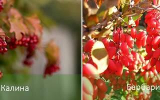 Цветущие кустарники для тени.
