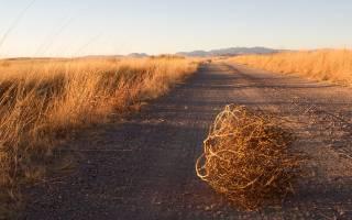 14 полезнейших советов огороднику