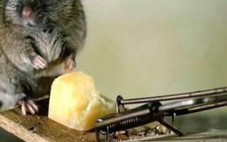 Даже мыши могут стать украшением на даче)