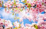 Лунный календарь. Благоприятные дни для посева овощей на рассаду в мае.