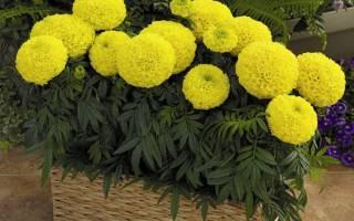 Оранжерея дома какие цветы можно посадить на балконе