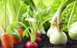 Крапива увеличивает устойчивость растущих рядом растений к болезням.