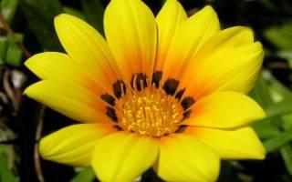 Цветы — это кусочек природы, окружающего нас мира, цветы — это радость, цветы — это повод улыбнуться, повод задуматься о прекрасном.