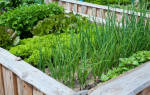 Аккурвтные грядочки для выращивания зелени.