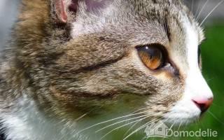 Кошка на даче, как подготовить