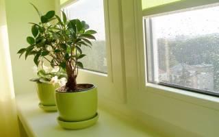 Зима: как избежать ошибок в уходе за комнатными растениями