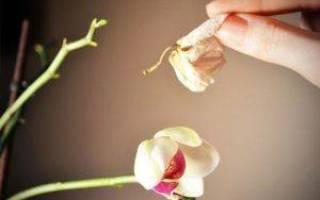 Почему у орхидеи опадают цветы и бутоны