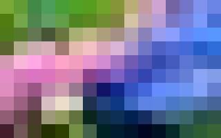 Завораживающий цвет гортензии