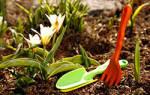 Органические удобрения для огорода: их виды и характеристики, варианты подкормки.