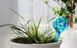 Цветы для забывчивых: девять растений, которые можно оставить без полива на месяц