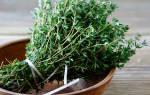 Невероятно мощная трава уничтожает стрептококк, герпес, кандиду, вирус гриппа и лечит более 50 заболеваний!