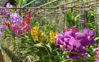 Ферма по разведению орхидей