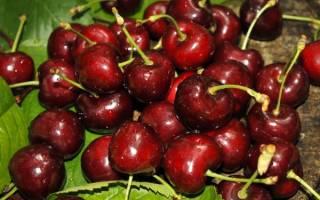 Самые лучшие самоплодные сорта черешни: описание и особенности их выращивания.