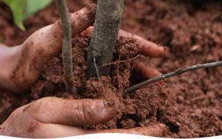 Посадка саженцев плодовых деревьев и кустарников в сентябре