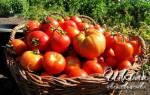 Бальзам для роста томатов — будут расти, как на дрожжа